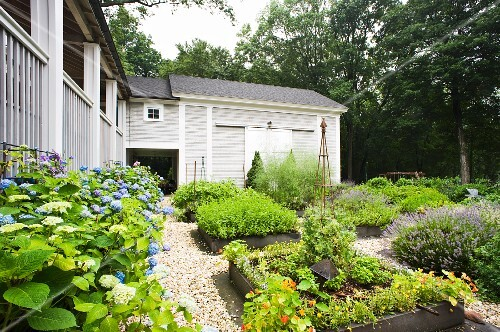 A garden with beds of herbs and hydrangeas