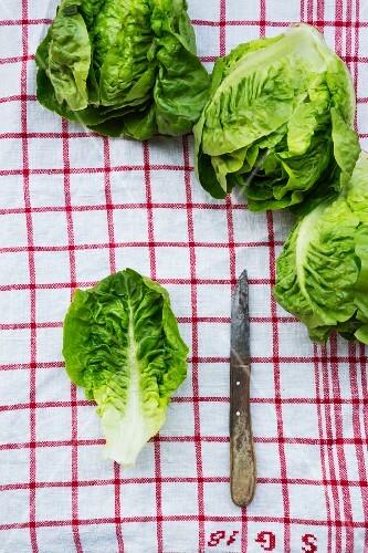 Lettuce on a tea towel