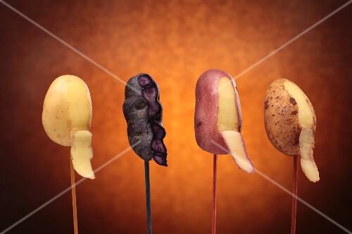 Various types of potatoes on sticks (peeled)