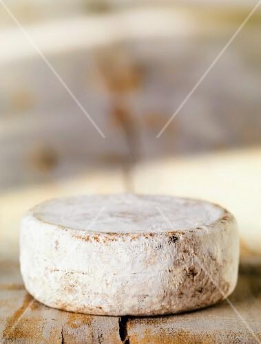 A wheel of Swiss Mutschli cheese