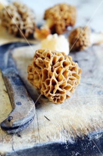 Fresh morel mushrooms on a chopping board