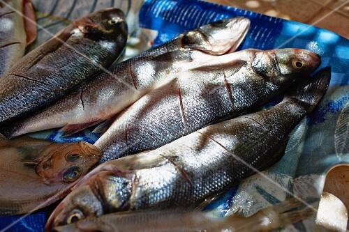 Scored fresh fish
