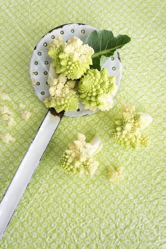 Romanesco cauliflower on an enamel draining spoon
