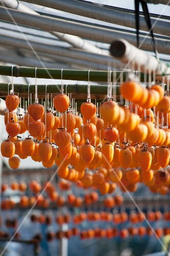 Persimmons hung out to dry (Japan)