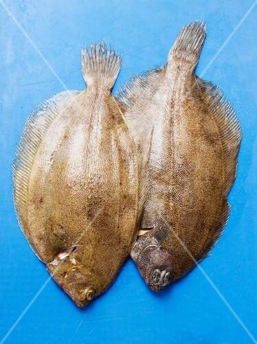 Two fresh lemon soles