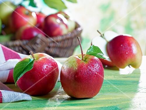 An arrangement of Elstar apples