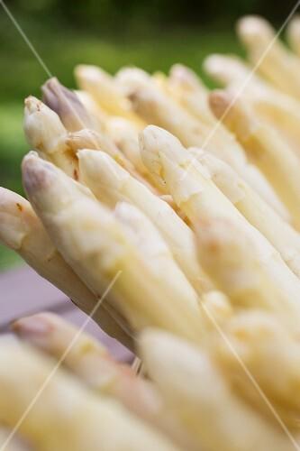 White asparagus (close-up)