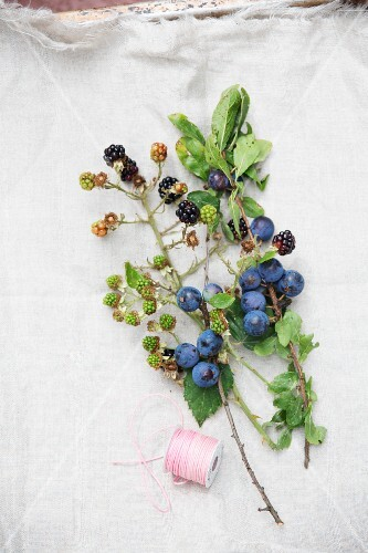 Sprogs of blackberries and sloes with leaves and fruit on a linen cloth