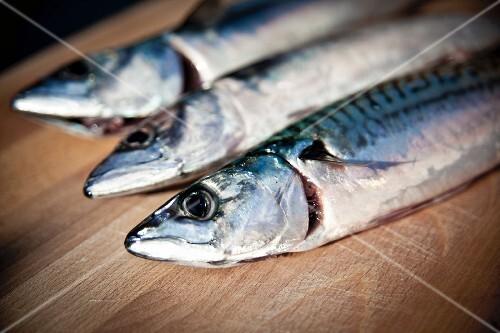 Three freshly caught mackerel on a wooden board