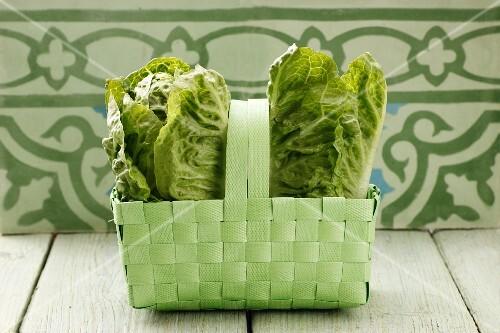 Fresh lettuce in a green basket
