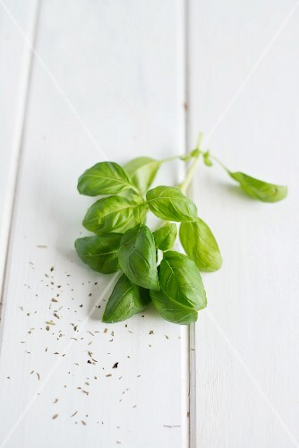 Fresh basil on a white wooden surface