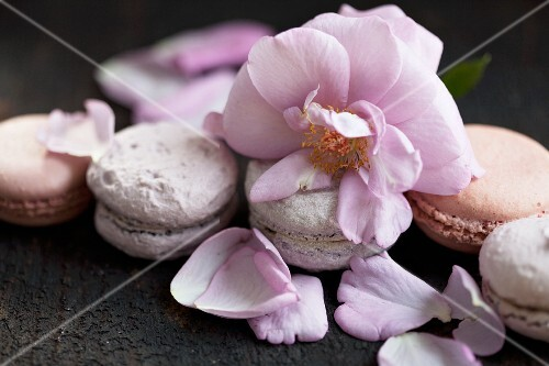 Roses and blueberry macaroons decorated with rose petals