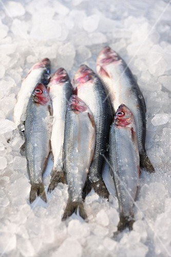 Fresh sardines on ice