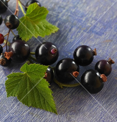 Blackcurrant with leaves (close-up)