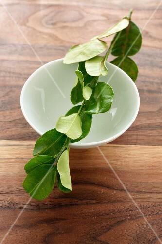 A sprig of lemon leaves balanced across a porcelain dish