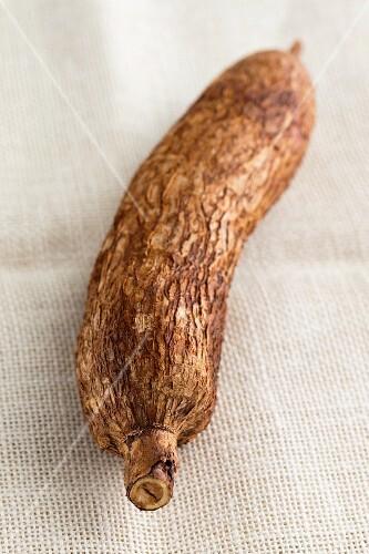 A cassava root