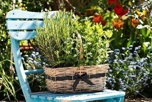 A basket of herbs on a garden chair
