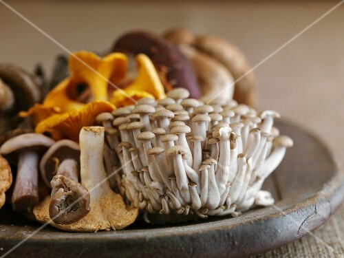Various fresh mushrooms on a wooden plate