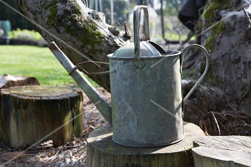 Old watering can on tree stump in garden