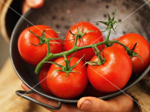 Hands holding a sieve of vine tomatoes