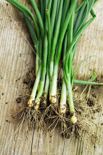 Fresh spring onions covered in soil