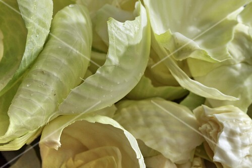 White cabbage leaves (seen from above)
