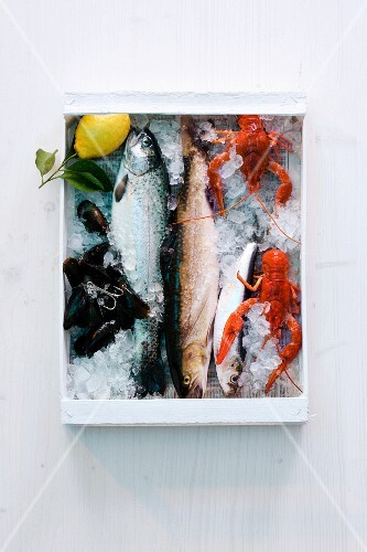 Fish, mussels and crayfish in a crate