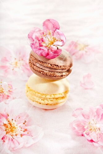 Two macaroons with apple blossom