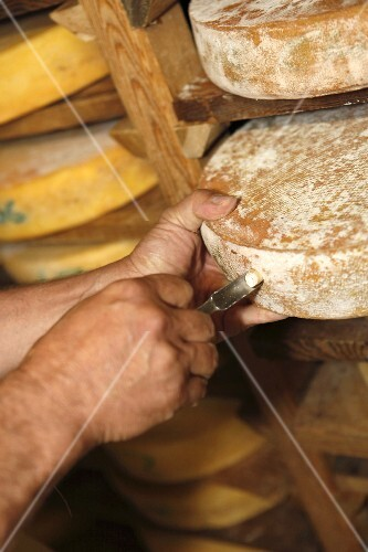 Wheels of cheese ripening on a wooden shelf in a dairy (France)