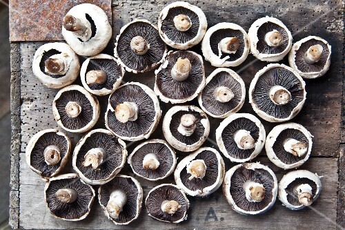 Field mushrooms lying upside-down on a wooden surface