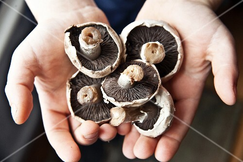 A child holding field mushrooms
