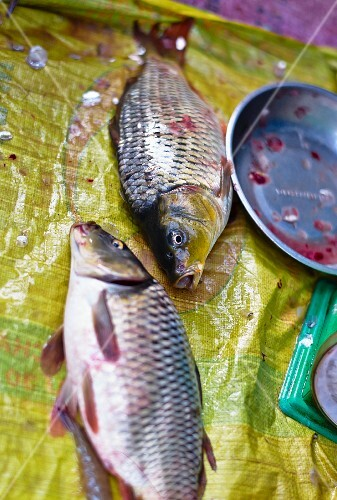Two dead carp at a market in Vietnam