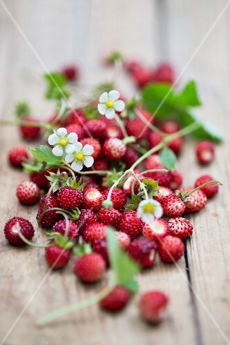 Wild strawberries with leaves and flowers on a wooden surface