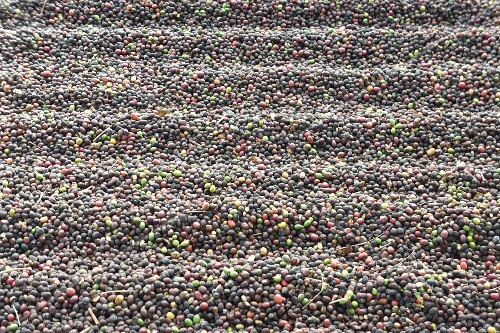 Lots of fresh coffee beans (full frame)