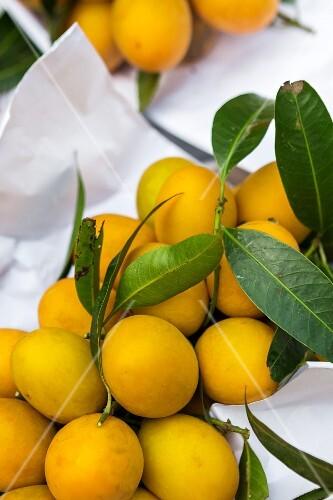 Marian plums (aka: gandaria or plum mango, Thailand)