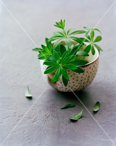 A bowl of fresh woodruff