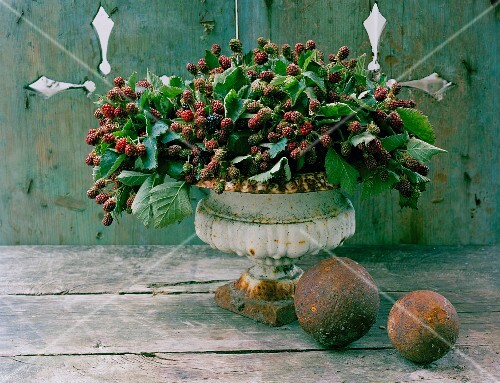 Arrangement of blackberries in decorative stone urn