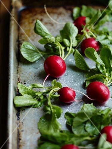 Fresh radishes on a baking tray