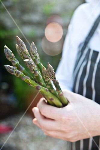 A chef holding fresh green asparagus spears