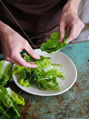 Waldorf salad being made: cos lettuce being shredded