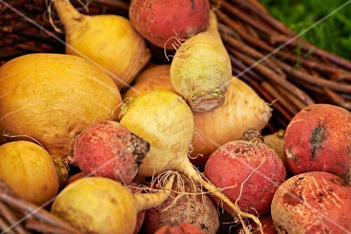 Various types of turnips in a basket