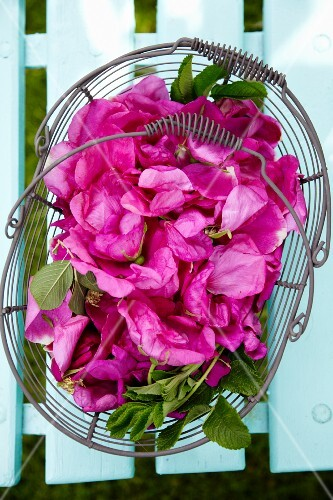 Wild roses in a wire basket (seen from above)