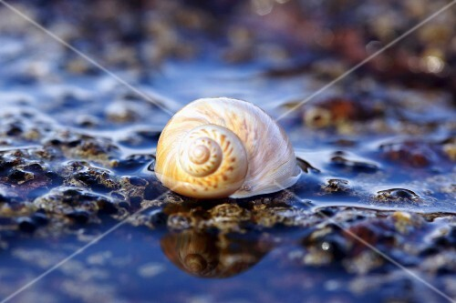 Snails show on the beach in the water