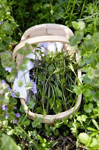 A basket of freshly harvested wild herbs