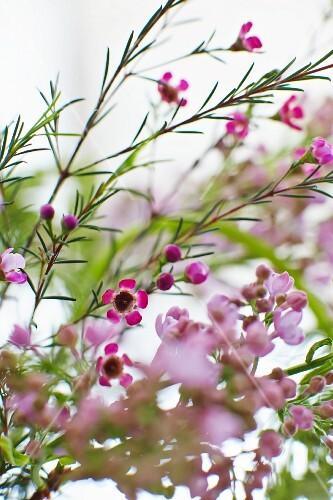 Delicate summer flowers