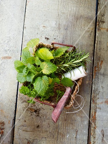 Fresh herbs with kitchen twine and a knife in a basket