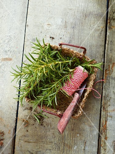 Fresh rosemary with kitchen twine and a knife in a wooden basket