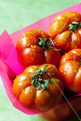 Bio-Tomaten mit Wassertropfen