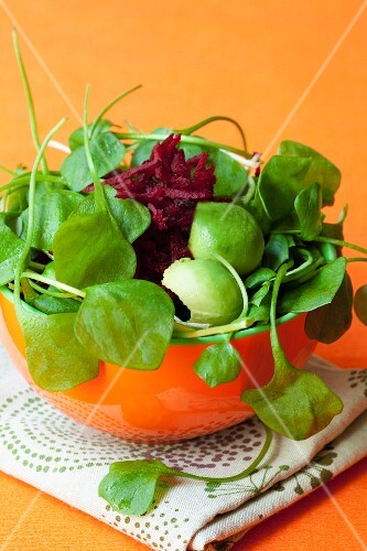 Purslane salad with avocado and beetroot