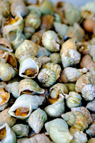 A pile of whelks at a market